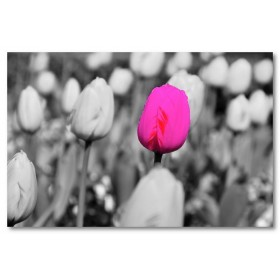 Αφίσα (ροζ, φύση, λουλούδια, τοπίο)